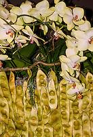 Switzerland. Springtime. Arrangement of white gardenia and seed pods.