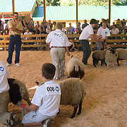 4H Livestock Show at the Columbia County Fair in Chatham, NY