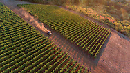 Cristom Vineyards pinot noir vineyards in the Eola-Amity Hills region of the Willamette Valley, Oregon