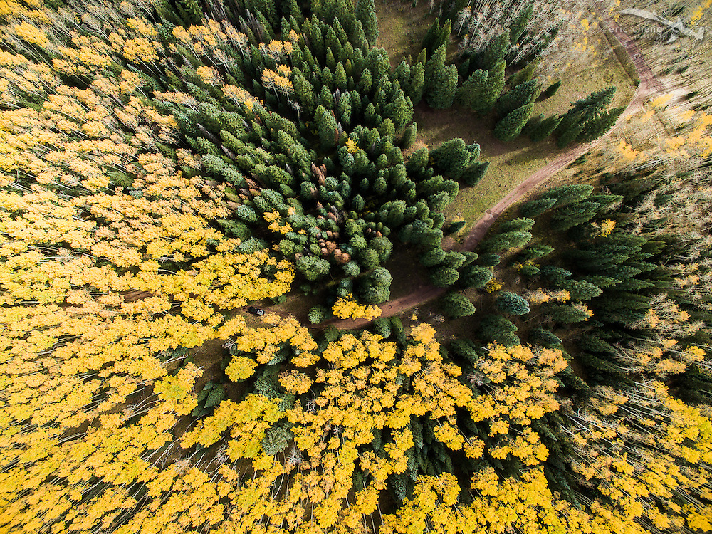 Low-altitude, straight-down aerial view of fall aspen and pine trees in Aspen, Colorado.