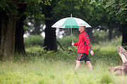 © Licensed to London News Pictures. 28/05/2014. Richmond, UK. A man walks with an umbrella.  Wet weather in Richmond Park today 28th May 2014. Photo credit : Stephen Simpson/LNP
