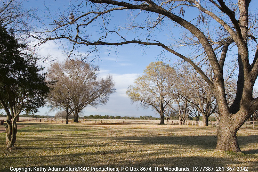 Pecan trees with grassy field in the late winter near Stonewall, Texas