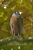 COSTA RICA Avian