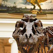Chicago_Field_Museum_Sue
