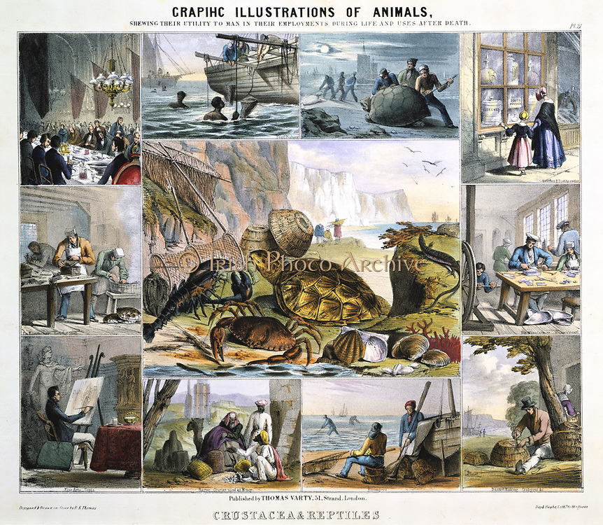 Crustacea: Turtle soup; Pearl diving; Catching turtles: Leeches: Tooth powder; Pearl buttons; Crab pots; Shrimpers; Cowrie shell money; Sepia; Tortoiseshell. Hand-coloured lithograph published London c1850. From 'Graphic Illustrations of Animals and Their Utility to Man'.