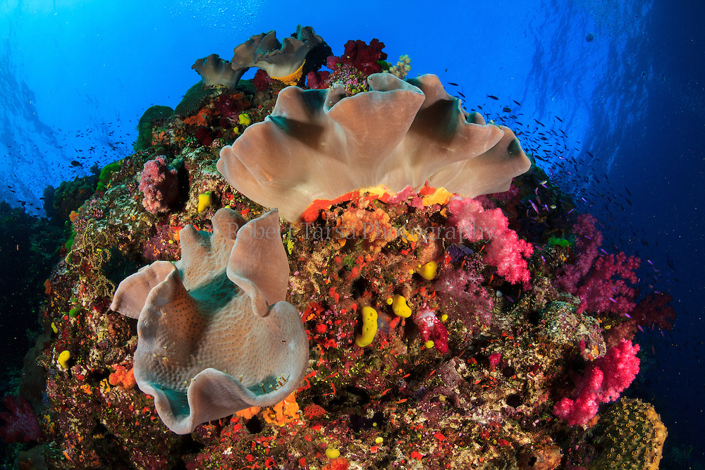 Soft corals growing on a Fijian reef waiting for current to run.