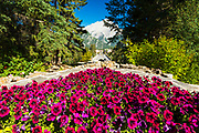 Flowers above Banff Avenue from the Administration Building, Banff National Park, Alberta, Canada
