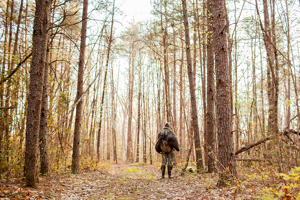 Turkey Hunter listens in hardwood forest.