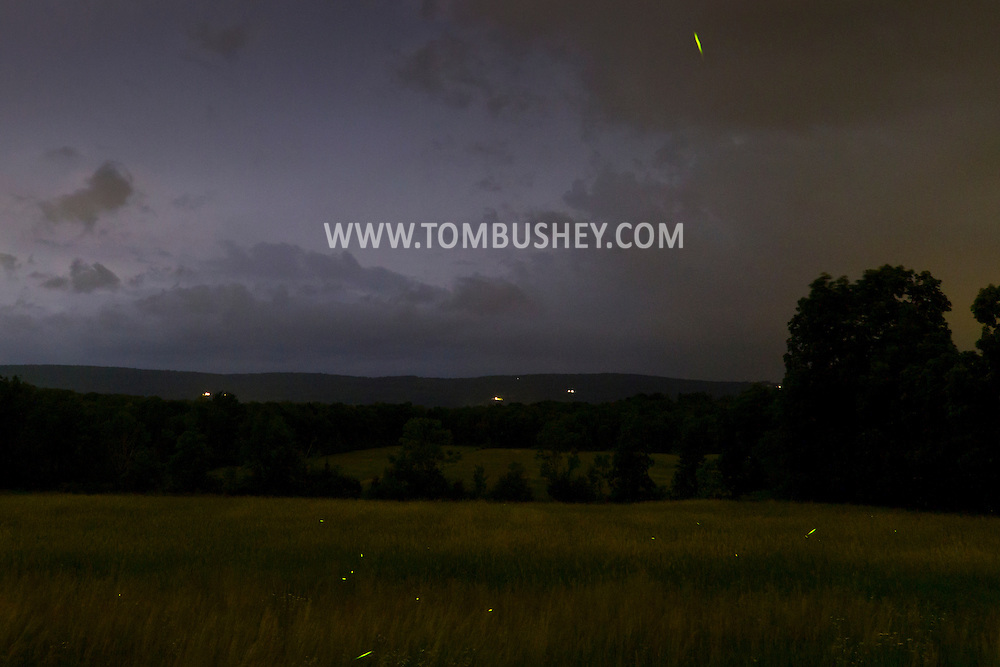 Town of Wallkill, New York -  Lightning in the sky and fireflies in the field  on June 25, 2014.