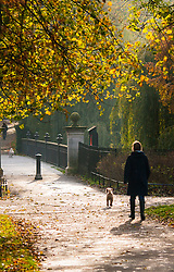 London, November 5th 2014. After a riny night, Londoners wake up to patchy morning sunshine as Autumn leaves herald the approach of winter, with some forecasters predicting extreme conditions. Pictured: A dog walker enjoys the morning sunshine in Regents Park.