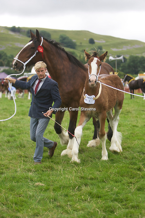 Richard &amp; Robert Bedford's Brood Mare Worsborough Chloe<br />