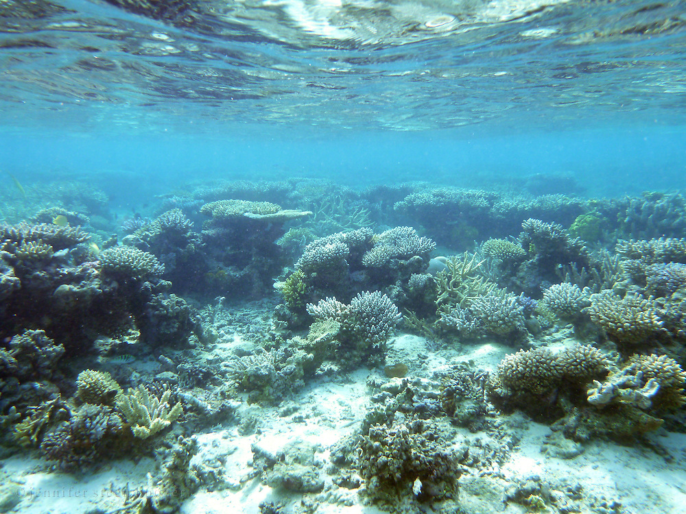 The shallow reef near Two Trees Island, Kadavu, Fiji.