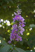 Flower<br />