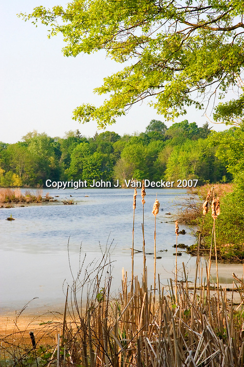 Spring-time marsh scene. The Celery Farm, Allendale, NJ - a public nature preserve scenic