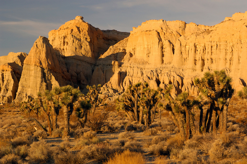Badlands and Joshua Trees, Red Rock Canyon State Park, California, United States of America
