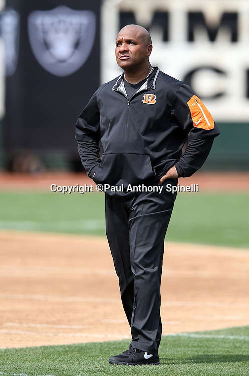 Cincinnati Bengals offensive coordinator Hue Jackson watches pregame warmups before the 2015 NFL week 1 regular season football game against the Oakland Raiders on Sunday, Sept. 13, 2015 in Oakland, Calif. The Bengals won the game 33-13. (©Paul Anthony Spinelli)