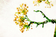 A creatively rendered multiple exposure photograph of a flowering tree and grass with clover.