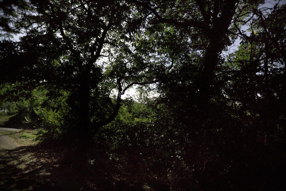 moon shining through tree foliage