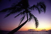 Sunset with palm tree<br />