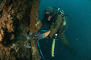 Commercial diver welding pipes underwater. Cables from the surface are supplying electrical power for the lights and torch, and allow communication with the surface. The diver is using a helmet connected to an air supply on his back. Photographed of the shore of Hadera, Israel