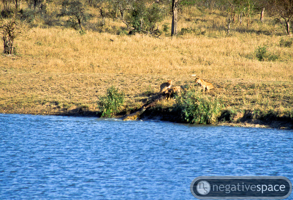 Battle at Kruger No. 14