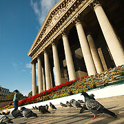 Pigeons outside Madeleine church in Paris