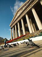 Pigeons outside Madeleine church in Paris