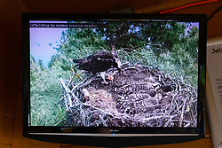 Live video feed of osprey nest at at Scottish Wildlife Trust visitor centre at Loch of the Lowes, new Dunkeld in Perthshire, Scotland, UK