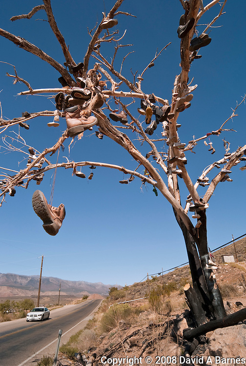 Shoe tree, shoes hanging in tree, Southern Utah, USA
