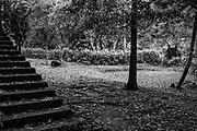 LUNUGANGA. <br />Steps and Pan Head