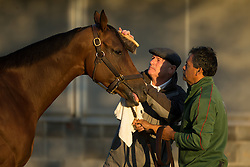 Breeder's Cup 2015 contender Beholder got a brush down by her trainer Richard Mandella after taking the track, Thursday, Oct. 22, 2015 at Keeneland Racecourse in Lexington.