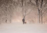 Central Park Blizzard 2013