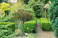 privet hedges as a feature in a small garden with a metal arch and roses