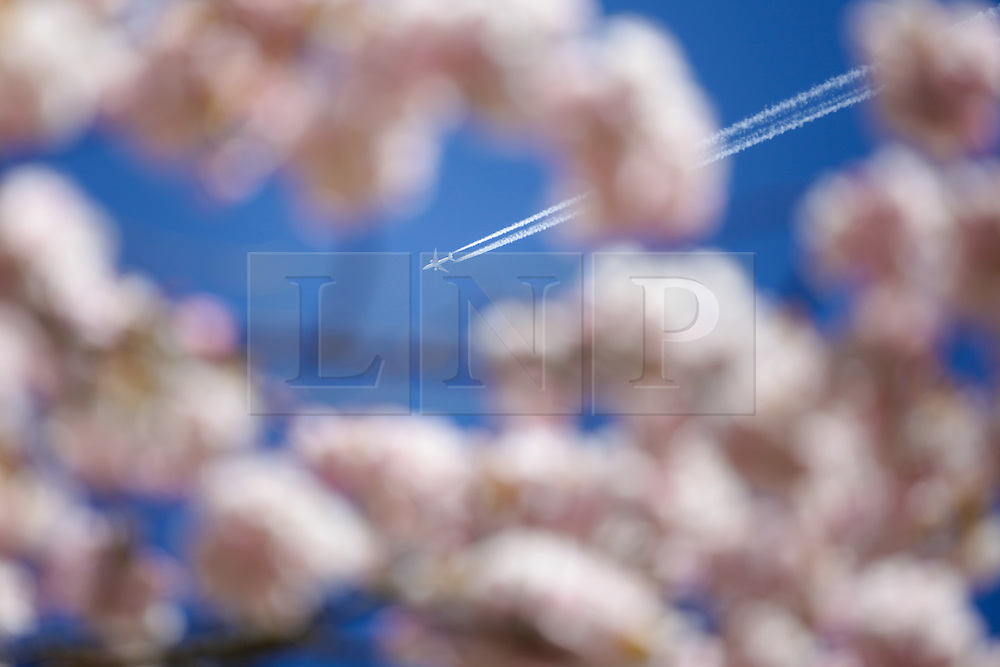 © Licensed to London News Pictures. 22/04/2015. Bristol, Avon, UK. An Air France Boeing 777-228(ER), Flight AF374, travelling from Paris to Vancouver see through Cherry Blossom at Westonbirt, The National Arboretum today, 22nd April 2015. The south west of England is set for more warm temperatures and plenty of sunshine today. Photo credit : Rob Arnold/LNP