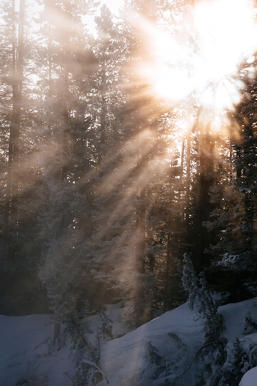 Rays of sunlight break through the trees during sunris in Yellowstone National Park.