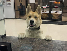 Lost Dog Reports Himself Missing At Local Police Station - 27 Feb 2020