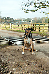 Wallace sat in front of Wentworth Woodhouse, a Grade I listed country house near the village of Wentworth in South Yorkshire. The East Front is  606 ft (185 m) long and is the longest country house façade in Europe..The house includes 365 rooms and covers an area of over 2.5 acres (10,000 Sq meters)..29 January 2010.Images © Paul David Drabble