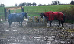 © Licensed to London News Pictures. 26/11/2012..Saltburn, England..Two horses try and stay dry as they eat following another night of heavy rain that caused chaos in East Cleveland and North Yorkshire..Photo credit : Ian Forsyth/LNP