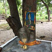 Shrine on East Coast with image of Cobra around a Margosa Tree.