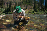 Westlope Cutthroat trout from the South Fork of the Flathead River in the Bob Marshall Wilderness of Montana.