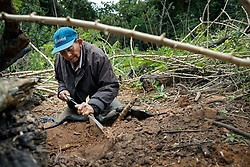 NO WEB/NO APPS - Exclusive. (Text available) A man collects yucca (manioc) roots in his 'chacra' (piece of land) in the jungle surrounding 'Palma Real' native community, near Puerto Maldonado, Peru on July 17, 2017. The Amazon rainforest is famous as 'The Lung of the Earth', but also for the presence of numerous native communities, who have always lived isolated and in close contact with nature for generations, used to seek for food and medicines and to build items directly from the environment in which they live. The unstoppable rise of globalization has drastically changed their needs, expectations and consequently their way of life. Located in the Tambopata National Reserve, on the border between Peru and Bolivia, the native Comunidad Palma Real is one of the clearest examples of this change. Living on the banks of the Madre de Dios River since approximately 1976, Palma Real comprises about 300 people part of the nomadic community Ese-Eja, established in the Amazon rainforest of Peru before the Spanish colonization. Photo by Giacomo d'Orlando/ABACAPRESS.COM