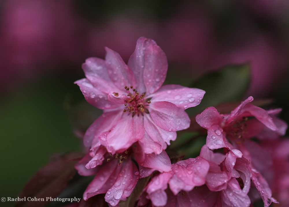 &quot;Rainy Day Pink&quot;<br />