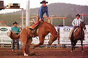 05 AUGUST 2000 - WILLIAMS, AZ: Jake Bowser rides his bronc during the saddle bronc riding competition at the 22nd Annual Cowpunchers' Reunion Rodeo in Williams, Arizona, Aug 5. The rodeo is held for working cowboys from the ranches in Arizona and the region. PHOTO BY JACK KURTZ