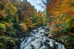 Autumn colours are lit by the sun over the Perthshire trees at The Hermitage near to Dunkeld.