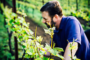 Winemaker Boyd Teegarden, examining early fruit at Natalie Estate Winery in the Willamette Valley, Oregon