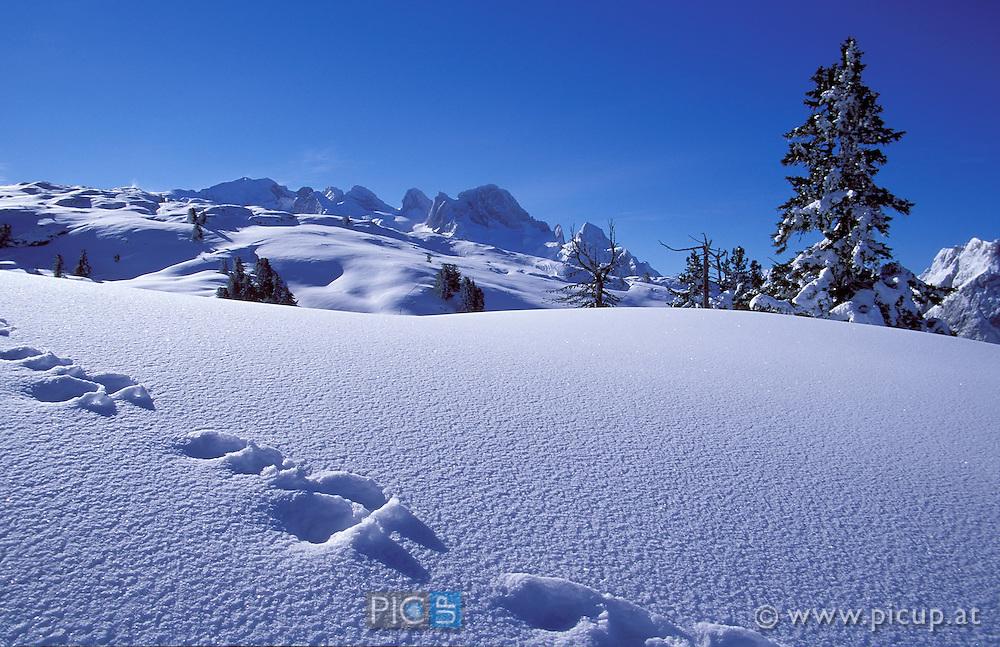 frische Hasenspuren im unberu?hrten Pulverschnee am Bergplateau, im Hintergrund der Gosaukaumm
