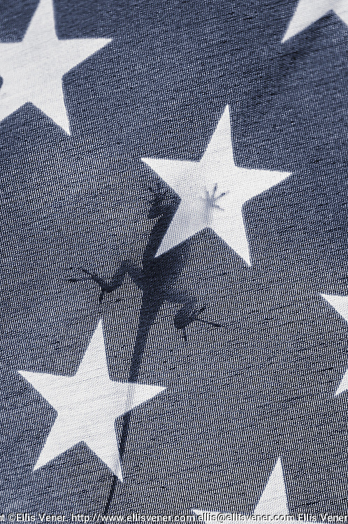 A Brown Anole Lizard climbs on an American Flag in Treasure Island, Florida