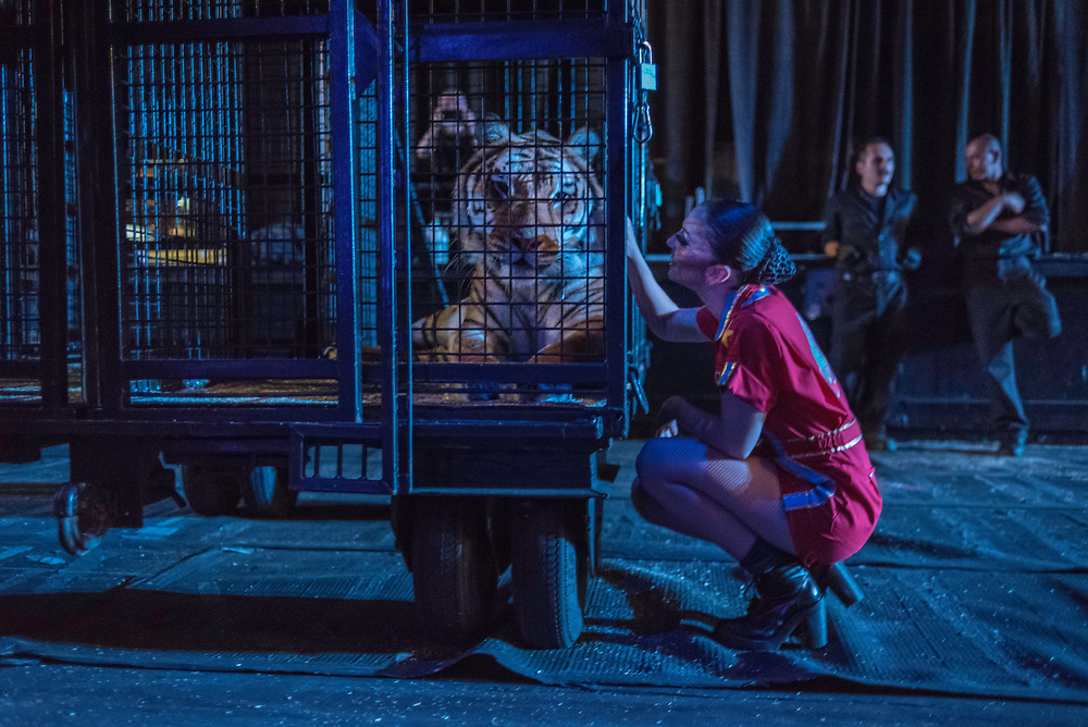 BALTIMORE, MD -- 4/28/17 -- Katie Azzario Lacey strokes her tiger, Cashmere, before the pre-show. Ringling Bros, the self-proclaimed Greatest Show on Earth, is in the final leg of a 146 year run. The final performances will be held in May. Out of This World, one of two circus units, recently had performances in Baltimore, led by Jonathan Lee Iverson, the first African-American ringmaster in the show's history…by André Chung #_AC15497