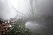Meghalaya, Living Root Bridges