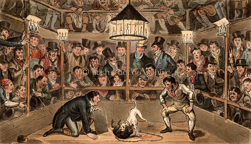 Tom and Jerry sporting their blunt on the phenomenon Monkey Jacob Masaccio at the Westminster   Pit. In the centre of the picture Tom and Jerry  are placing cash bets (sporting their blunt) on the outcome of the fight between a monkey and a bull terrier.  The scene is lit by candles. Illustration by (Isaac) Robert Cruikshank and George Cruikshank Snr. for 'Life in London' by Pierce Egan (London, 1821). Aquatint.